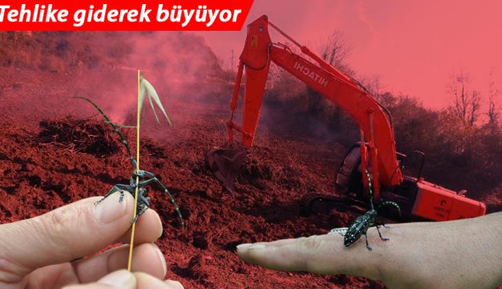 Trabzon'da drakula tehlikesi giderek büyüyor! Ağaçlar yakılıyor... 'Son derece tehlikeli'