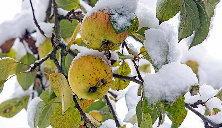 4 SORU 4 YANIT | Bir gün güneş ertesi gün kar! Bu havalar tarımı nasıl etkiliyor?
