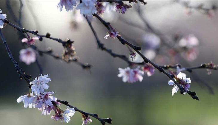 Cemre ne zaman düşecek? Baharın müjdesi cemrelerin ilki o tarihte havaya düşecek!