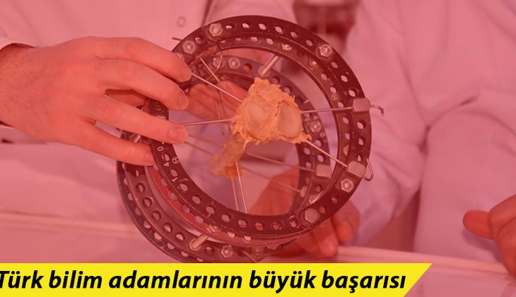 Türk bilim adamlarının büyük başarısı! Kudret narının kemik kırığı tedavisinde kullanılabileceği ispatlandı
