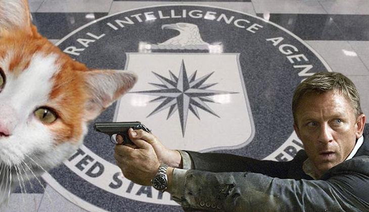 CIA'in casus kedi projesi yıllar sonra deşifre oldu