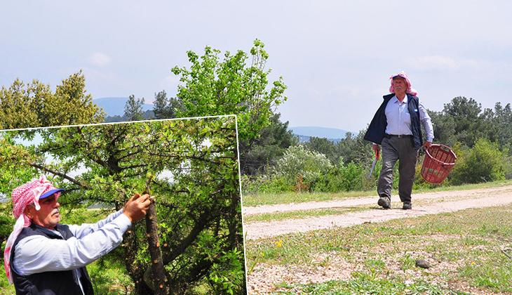 Manisa'da kuşlar için dağ tepe dolaşıp ağaçları aşılıyor