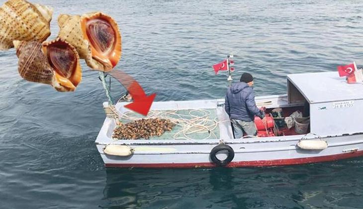 Boğaz'da salyangoz avı