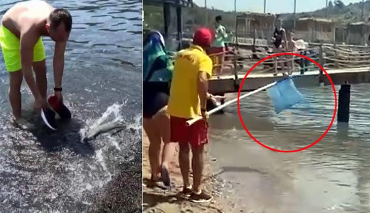 Akdeniz'de balon balığı tehlikesi! 'Kıyıda görmeye alışmalıyız'