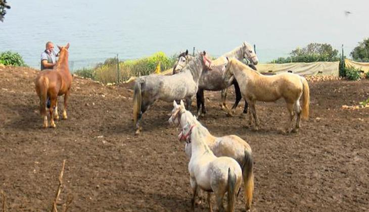 Bitmeyen çile... Kayıp atlarla ilgili şaşırtan iddia