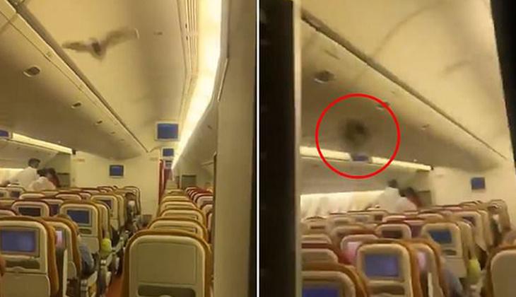 Yolcu uçağında yarasa paniği! Acil iniş yaptı