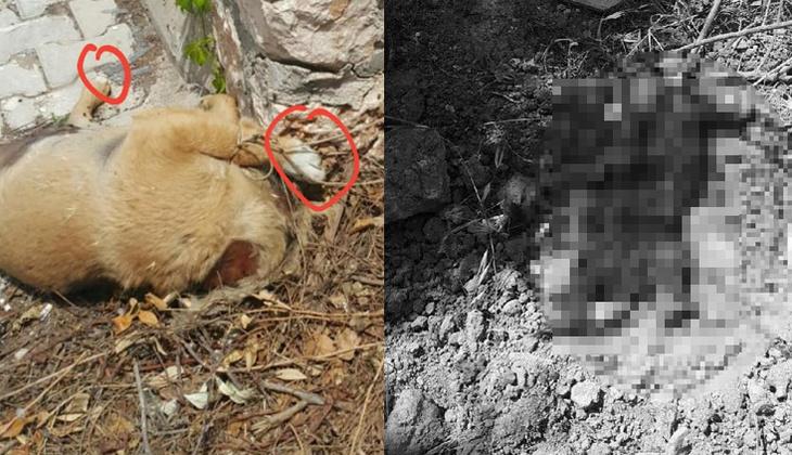 Bunun adı vahşet! Yavru köpekler katledildi