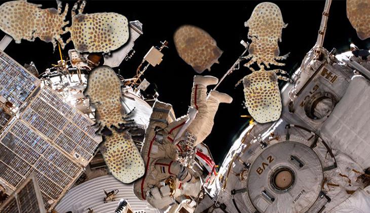 NASA ve Space X'ten ses getirecek proje: Uzaya taze meyve, deniz canlısı ve pamuk fidesi yolladılar!
