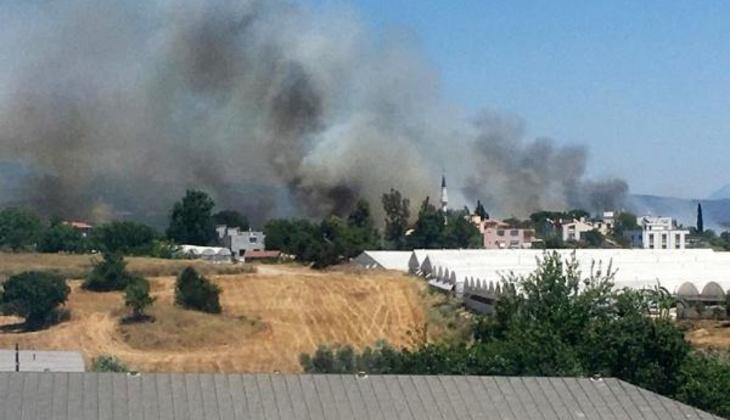 Son dakika... Antalya Serik'te 3 noktada orman yangını