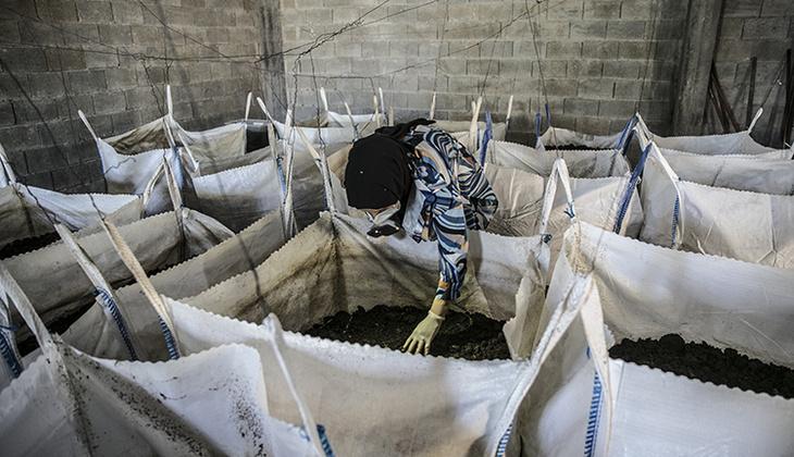 Mezun olur olmaz evinin bodrumunda beslemeye başladı! Yıllık 12 bin ton üretiyor