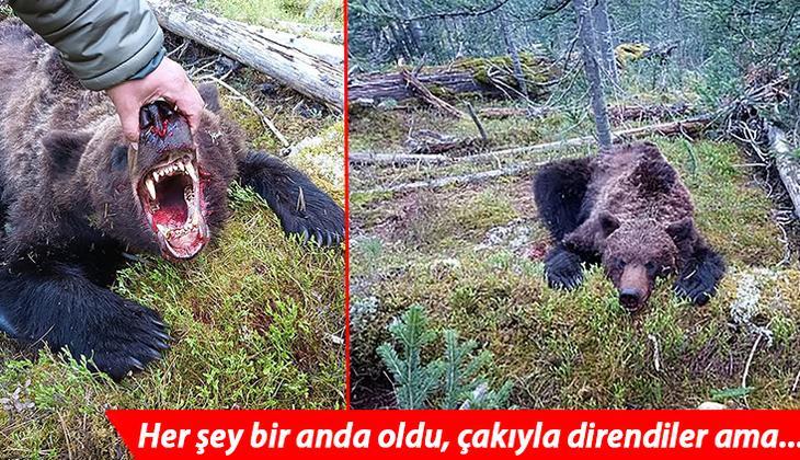 Rusya'da inanılmaz anlar: Ulusal parkta ayı dehşetini yaşadılar!