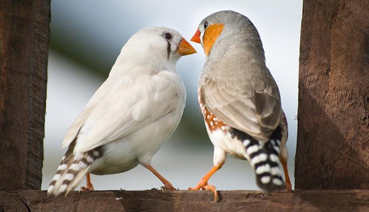 Onlar da cümle kuruyor! İnsanlar gibi iletişim kuran kuşlar...