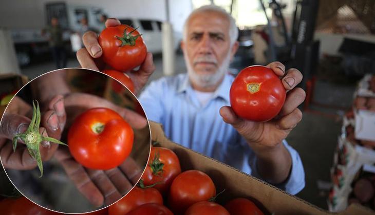 İsrail'den tuhaf yasak... Şimdi de 'sapsız domates' şartı getirdiler!