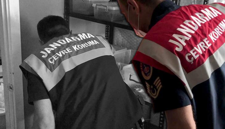 Son dakika: İstanbul'da hayvan kaçakçılığı operasyonu! Ele geçirilenler şaşkına çevirdi
