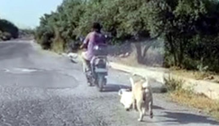 Mersin'de dehşete düşüren görüntü! Köpeği böyle sürükledi