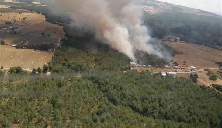 Son dakika... İzmir Bornova'da orman yangını