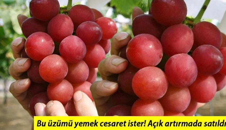 Japonya'da rekor açık artırma... Kızıl üzümün salkımı 1,4 milyon yene satıldı
