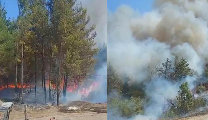 Son dakika... Adana Kozan ve Sarıçam'da orman yangını