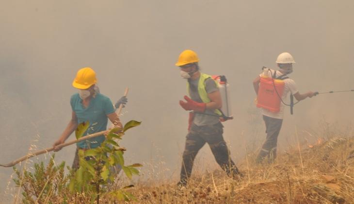 Son dakika haberi: Muğla'da zeytinlik ve ormanlık alandaki yangınlara 6 tutuklama