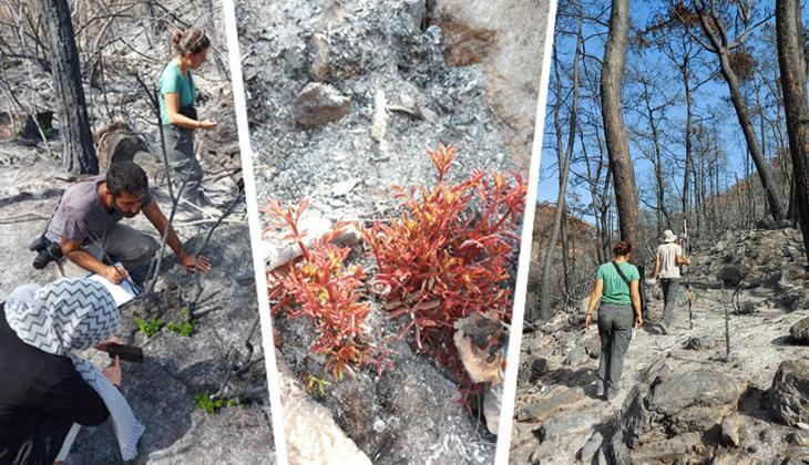Muğla'da yanan 'özel bölgeler' için ekolojik kurtarma operasyonu