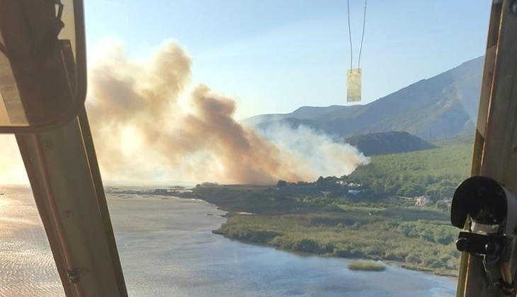 Aydın'da ormanlık alanda yangın! Ekiplerin müdahalesi sürüyor