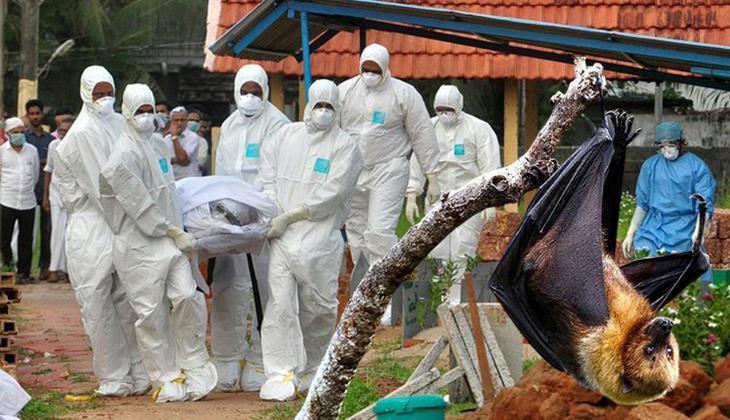 Son dakika... Koronavirüs bitmeden yeni salgın: 12 yaşındaki çocuk, yarasa kaynaklı Nipah virüsü yüzünden hayatını kaybetti