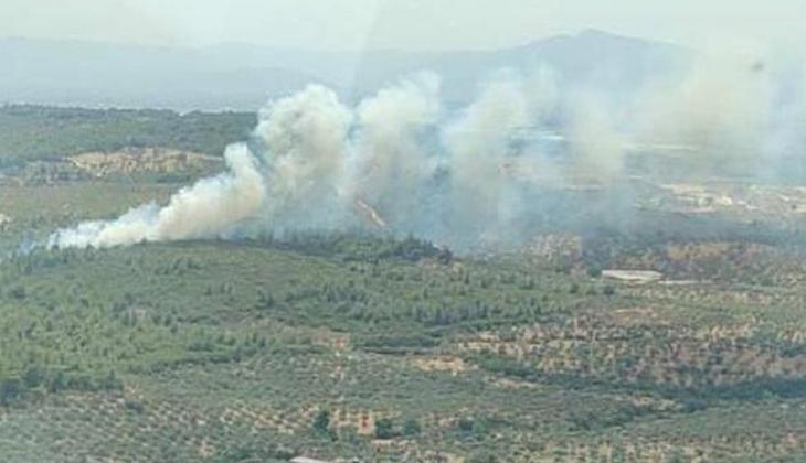 İzmir'de makilik yangını! Kısmen kontrol altına alındı