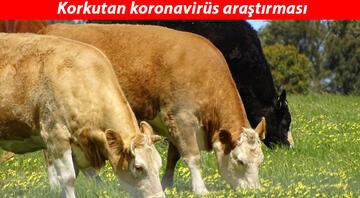 Son dakika haberi: Korkutan koronavirüs araştırması... 26 hayvan türü insanlara hastalık geçirebilir