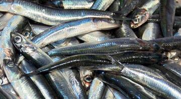 İstanbul Boğazında hamsi yasağı kalktı, balıkçılar akın etti Tezgah fiyatı belli oldu