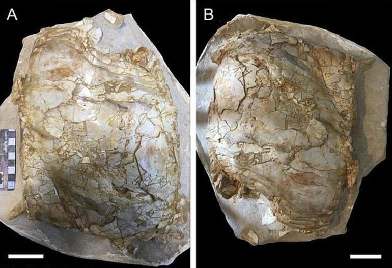 İngilterede bulunan 66 milyon yıllık balık fosili heyecan yarattı