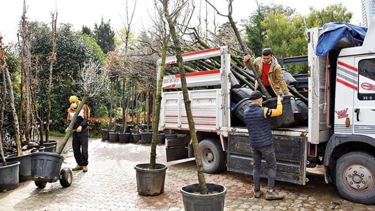 Asırlık ağaçları kesen firma 40 ağaçla kurtuldu