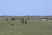 Kızılırmak Deltası küçülüyor Korkutan görüntü