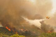 Antalya tarihinin en büyük orman yangınlarındandı... Yeşile büründü