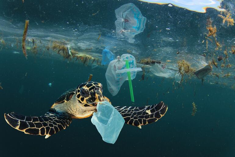 Balık diye plastik mi yiyoruz Marmara ve Karadeniz'deki balık türlerindeki sonuçlar şaşırttı