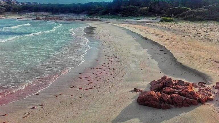 İtalyan Robinson Crusoe 32 yıldır tek başına yaşadığı adadan ayrılıyor