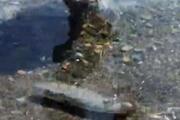 Kıyıya kadar gelen balon balıkları bu kez de Kemerde görüntülendi