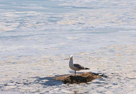 Denizlerde seferberlik
