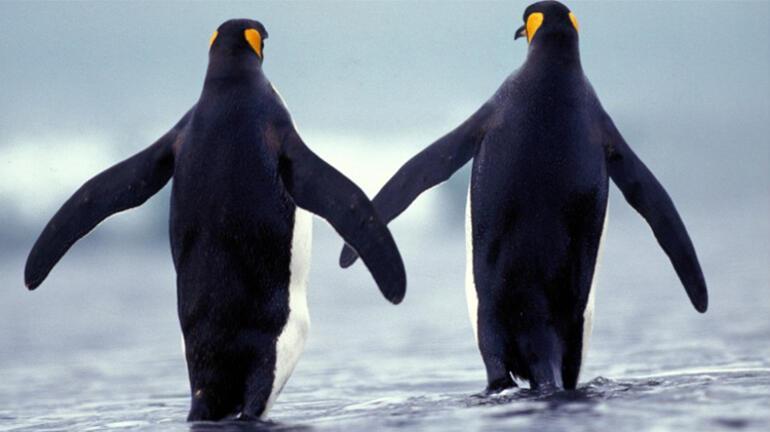Onlar da cümle kuruyor İnsanlar gibi iletişim kuran kuşlar...