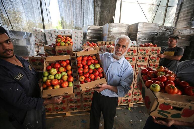 İsrailden tuhaf yasak... Şimdi de sapsız domates şartı getirdiler
