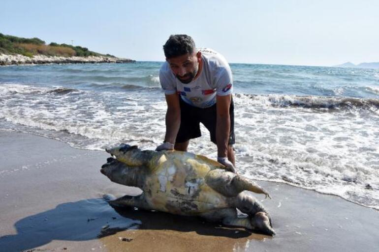 Nesli tükenme tehlikesi altında... Antalyada ölü bulundu