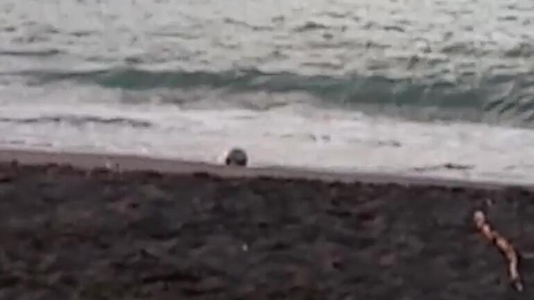 Düzcede kıyıya Rus yapımı mayın tetikleyicisi vurdu