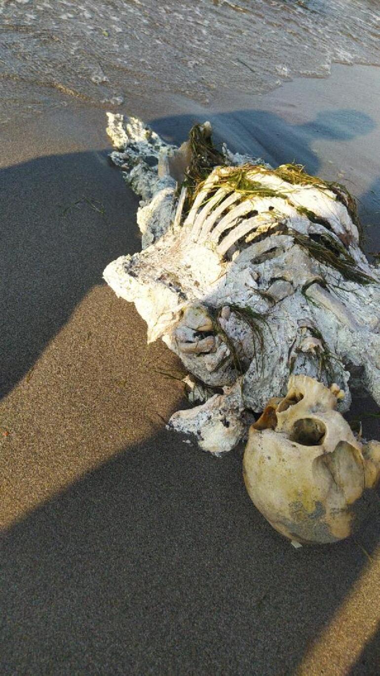 Samsunda sahilde yürüyüş yapanlar fark etti İskelet kıyıya vurdu