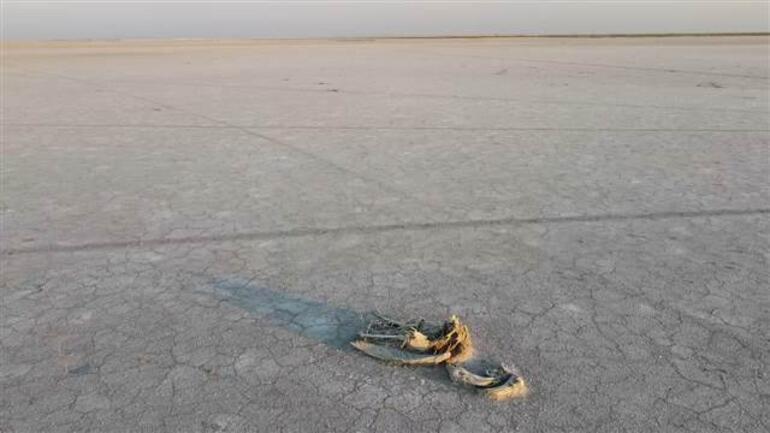 Son dakika... Tuz Gölünde yüzlerce flamingo öldü Konya Valiliği soruşturma başlatıldığını duyurdu