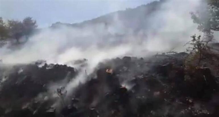 Son dakika... Mersinde orman yangını Orman Bölge Müdürü Kenan Akduman: Riskli bir yangınla karşı karşıyayız