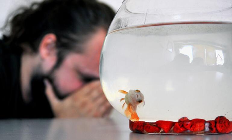 Süs balığı felaketi Heves kaçınca atılıyor, bakın neye yol açıyor...