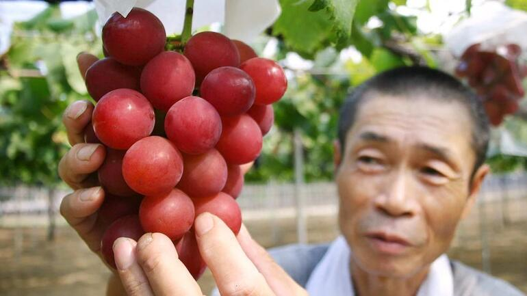 Japonyada rekor açık artırma... Kızıl üzümün salkımı 1,4 milyon yene satıldı