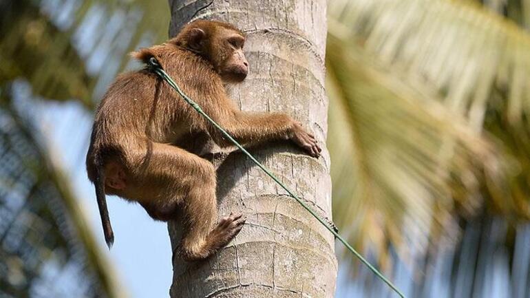 Son dakika haberi: Koronadan sonra yeni kâbus Monkey B virüsü: Çinde görüldü, ilk ölüm haberi geldi