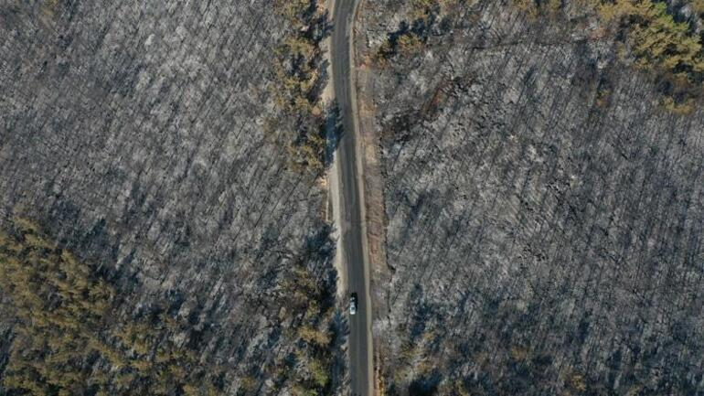 Son dakika: Bodrumda yeni yangın Yerleşim alanına 150 metre uzaklıkta... Ev ve oteller boşaltılıyor