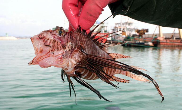 İstilacı türler Marmara ve Karadenizi de tehdit ediyor Yerli balık türleri azalırsa bizi neler bekliyor