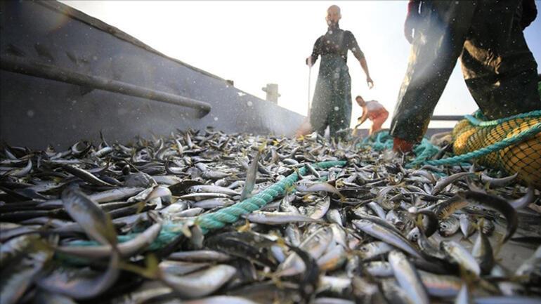 Balık sezonu müsilajın gölgesinde açıldı... Tehlike geçmedi balıksız kalabiliriz